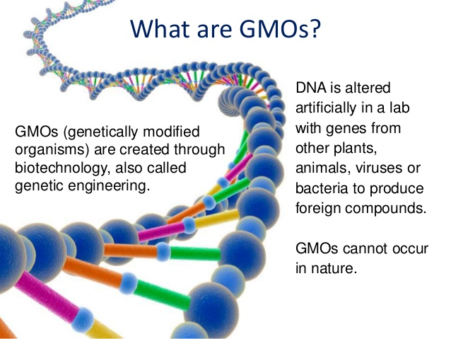 genetically modified organism dna essay Gmo stands for genetically modified organisms these organism's, genetic material have been altered using techniques usually known as recombinant dna technology recombinant dna technology is the ability to combine dna molecules from different sources.